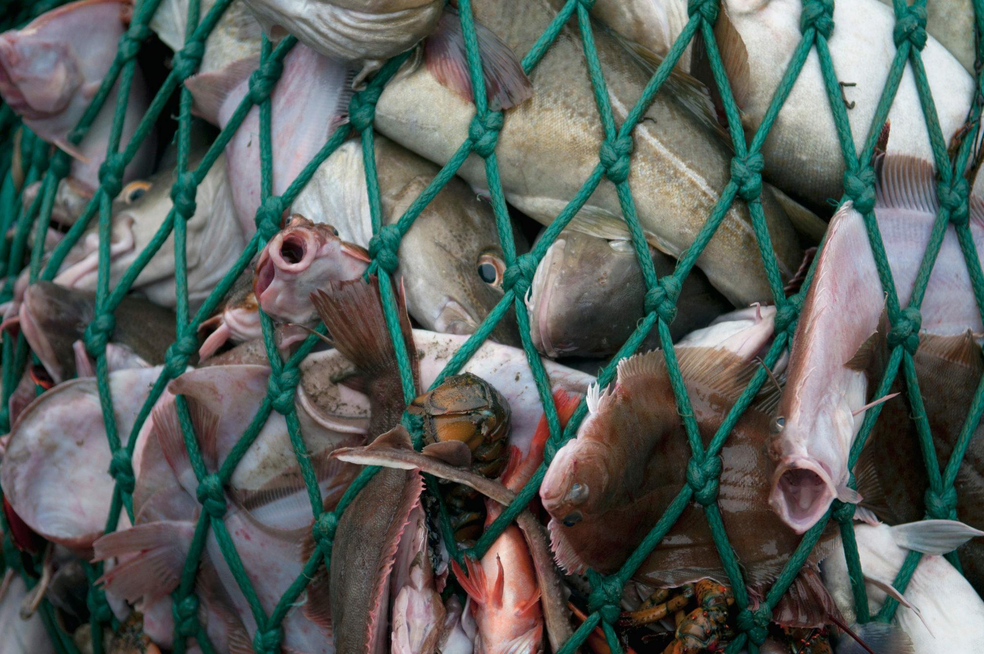 Climate, Biodiversity & Overfishing